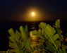The moon glimmering over the sea - click to enlarge